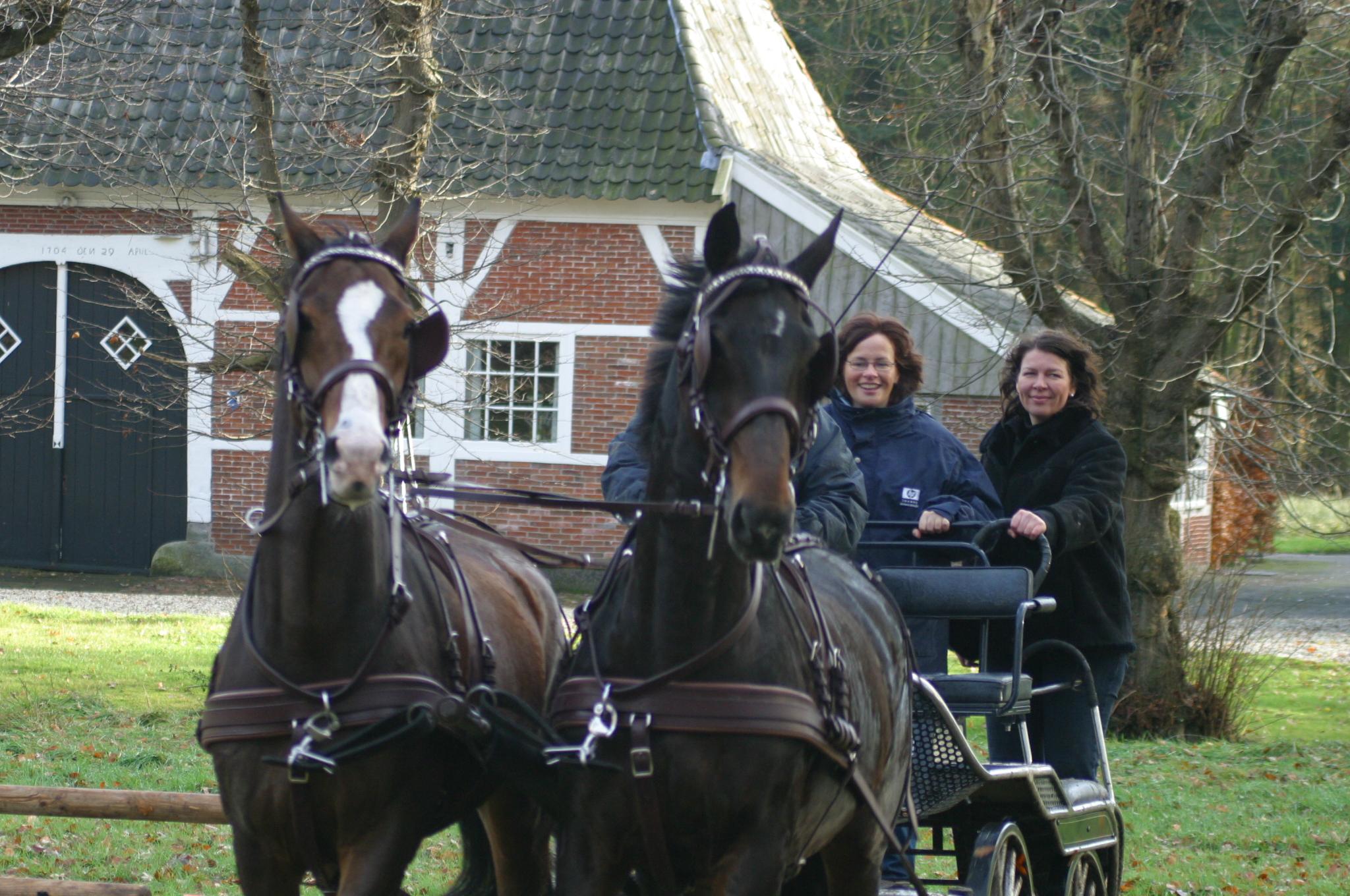 Paarden Mennen Hulsbeek Events